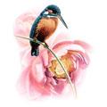 Скачать обои птицы, обыкновенный зимородок, Zeng Xiao Lian 800x600