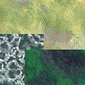 Сине-зеленые туманы