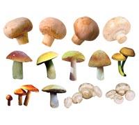 Lenagold клипарт грибы