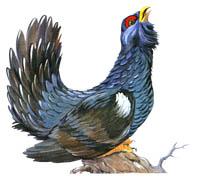 Мир животных.  Перелетные и зимующие птицы...