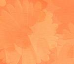 Обои - оранжевые цветы