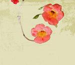 Обои - розовые цветы